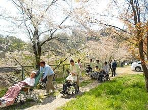 桜の花びらが舞う中、御家族と一緒に桜の花を楽しんでいただきました