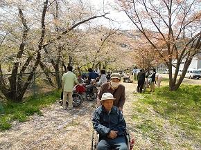 青空のもと、桜のトンネルを歩きました
